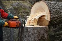 AS Baum I Aufbaukurs zum Grundkurs DGUV Modul B